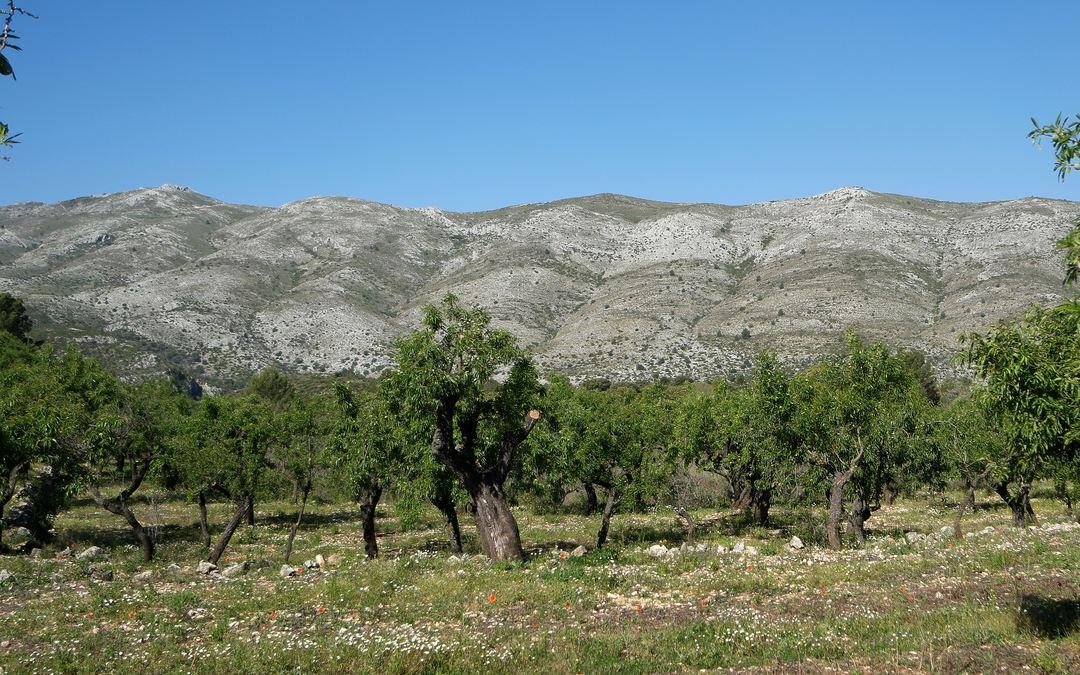Top Five Barranco Del Infierno Alicante Como Llegar - Circus