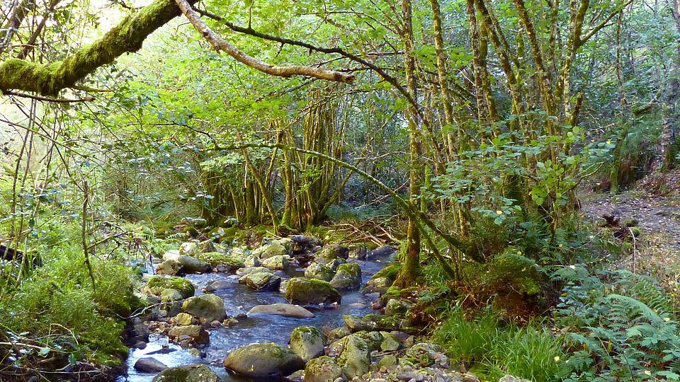 Paseo por el bosque encantado de Muniellos
